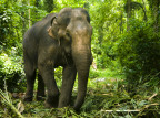 Indie: 18 słoni zginęło od uderzenia piorunem