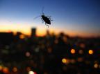 Tajwan: do restauracji wpuszczono ponad tysiąc karaluchów