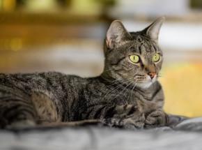 Petersburg: trwa spis kotów mieszkających w muzeach