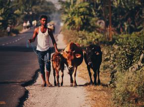 Indie: mieszkańcy zaczęli stosować krowie ekskrementy w celu ochrony przed zakażeniem COVID-19