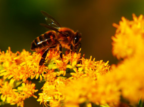 Dolnośląskie: oskarżono rolnika o otrucie 7,5 mln pszczół