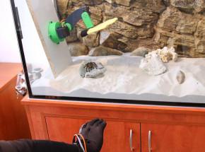 Leczenie arachnofobii poprzez wirtualne dotykanie pająka