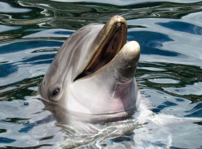 Ghana: dochodzenie w sprawie 60 martwych delfinów znalezionych na plaży