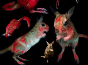 Naukowcy odkryli świecenie futra u afrykańskich gryzoni