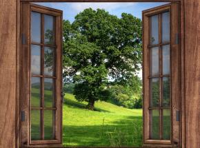 Szkło będzie można zastąpić przezroczystym drewnem?