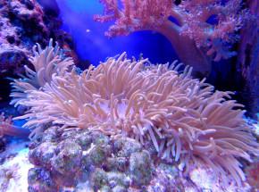 Hong Kong: druk 3D wspomaga odbudowę koralowców