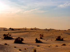 Afryka: Wielki Zielony Mur otrzymuje ponad 14 mld dolarów od darczyńców