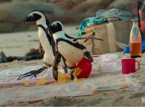 """""""Penguin Town"""" - oto oficjalny zwiastun"""