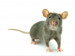 Badania wykazały, że w nagłych wypadkach niektóre ssaki zdolne są oddychać przez odbyt