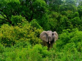 Niecałe 3% światowych ekosystemów pozostaje nienaruszonych przez człowieka