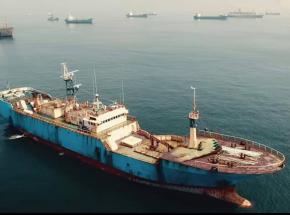 """""""Seaspiracy"""" - zwiastun dokumentu o przemyśle rybackim"""