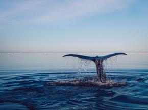 Martwy wieloryb znaleziony na plaży na Florydzie