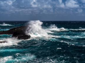 Ludzki hałas zagraża zwierzętom morskim