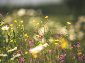 Wykosimy sobie bioróżnorodność? Znaczenie łąk kwietnych w miastach