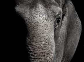 Indie: aresztowano 2 osoby, które rzucały w słonia płonącą reklamówką