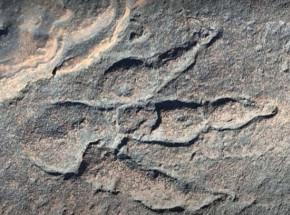 Walia: dziewczynka odkryła ślad dinozaura