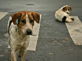 Powstał projekt aplikacji Animal Helper, która pomoże uratować setki polskich zwierząt