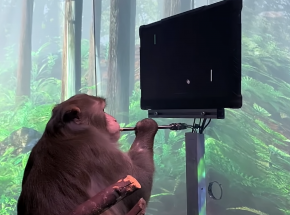Neuralink: pierwsze wideo małpy grającej w MindPonga