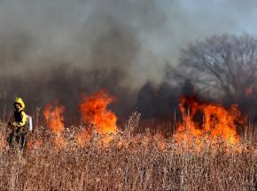 W Polsce przez weekend odnotowano 1,5 tys. pożarów traw