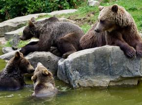 Tatry: przebudzenie niedźwiedzicy i jej młodych powoduje zamknięcie kilku szlaków górskich