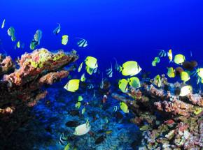 Gra wideo pomaga chronić rafy koralowe