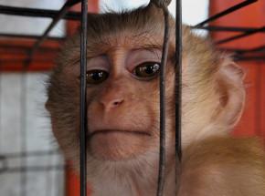 Madryt: zawieszenie niemieckiego laboratorium w związku z domniemanym znęcaniem się nad zwierzętami