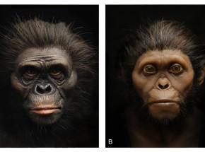 Australia: zrekonstruowano twarz kobiety sprzed 3,2 mln lat