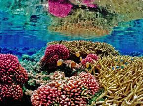 Koralowcom Morza Czerwonego grozi katastrofa ekologiczna