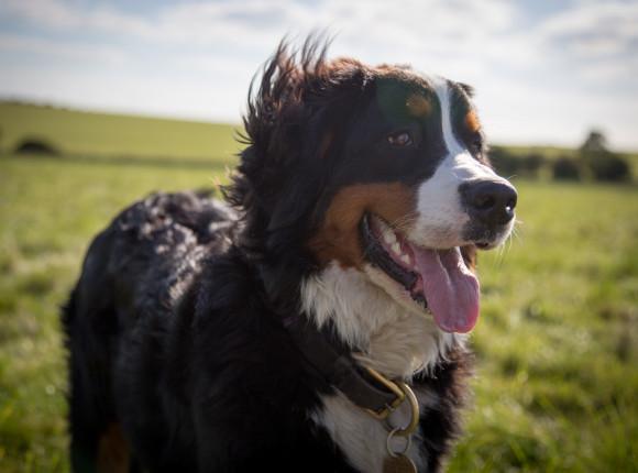 USA: zakaz importu psów ze 113 państw