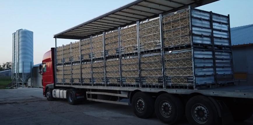 Z tira transportującego drób do Polski wypadły pojemniki z brojlerami