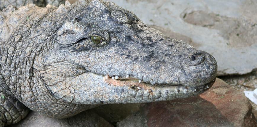 Meksyk: brytyjskie siostry bliźniaczki zaatakowane przez krokodyla