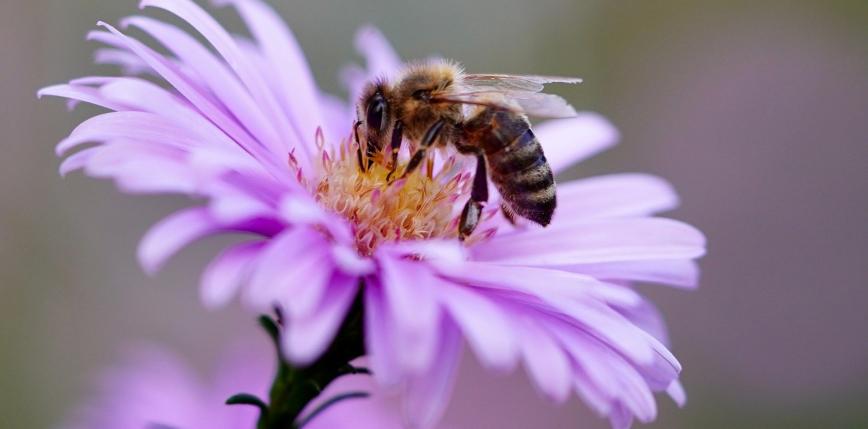 Nie ma pszczół, nie ma nas? [FELIETON]