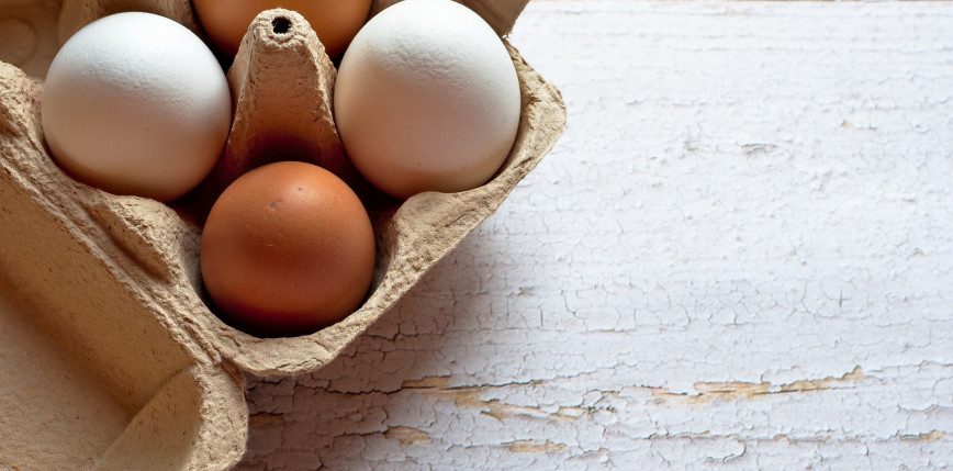 Nowe równanie matematyczne kształtu jaja
