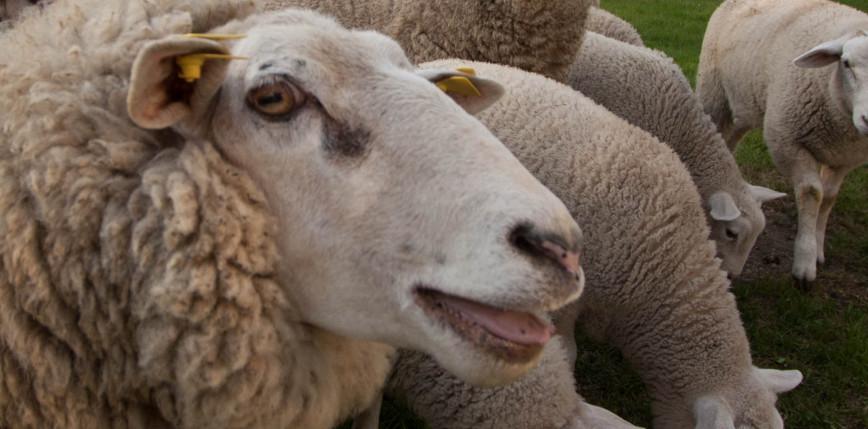 Hodował owce na terenie nieruchomości w Warszawie - kasacja RPO na korzyść obwinionego