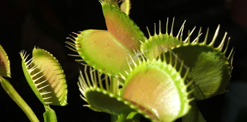 Natura i technologia? Powstanie robo-roślin