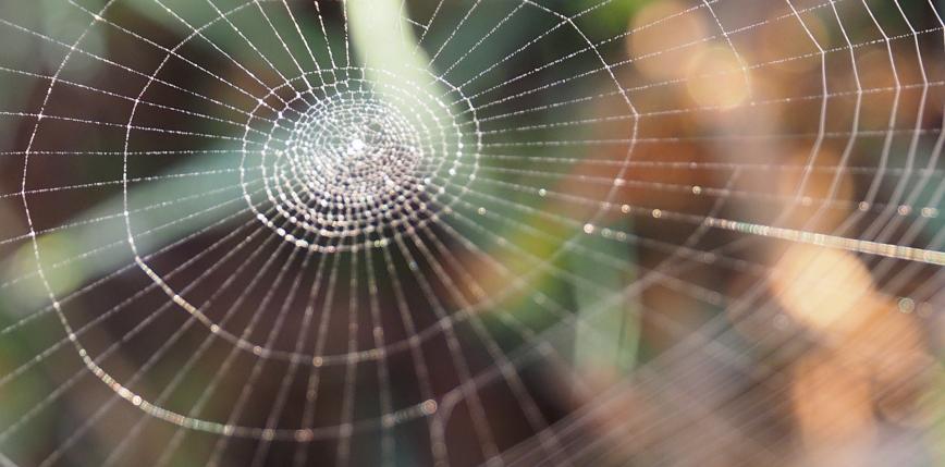 Naukowcy tworzą muzykę poprzez wykorzystanie pajęczyn