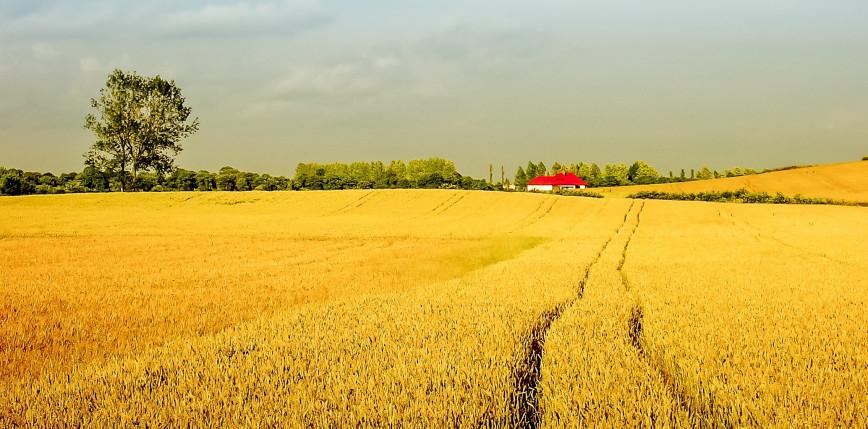 Powszechny Spis Rolny 2020: mniejsza liczba gospodarstw rolnych