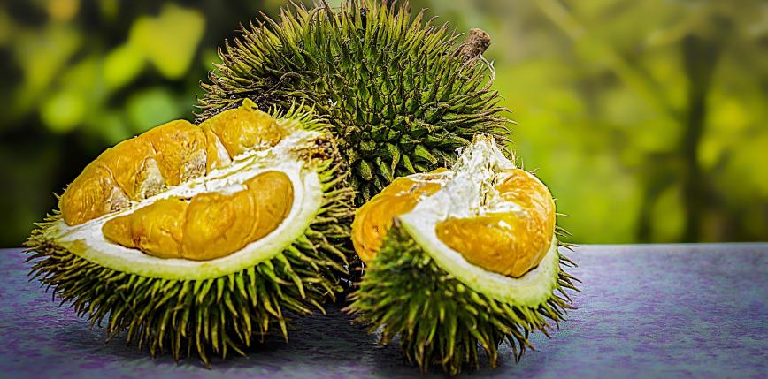 Antybakteryjny żelowy bandaż z łupin duriana