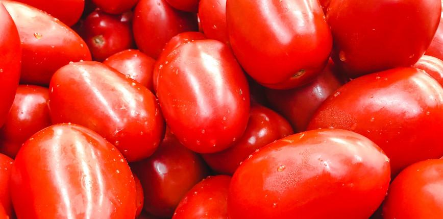 Pomidory zmodyfikowane genetycznie dostępne w sprzedaży