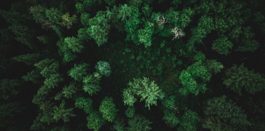 W ciągu 20 lat naturalnie odrodziły się lasy wielkości obszaru Francji
