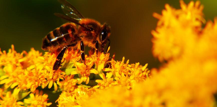Gniazda pszczele drukowane w 3D z wbudowanymi kamerami