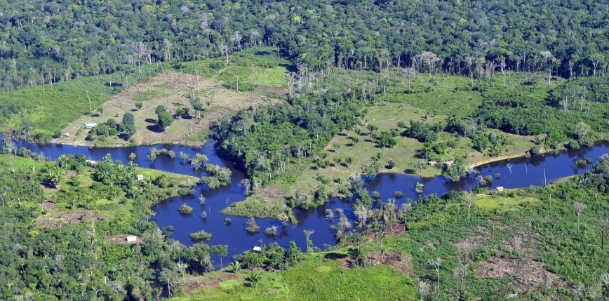 Brazylia: znaczny wzrost wylesienia Amazonii. Kary środowiskowe coraz mniejsze