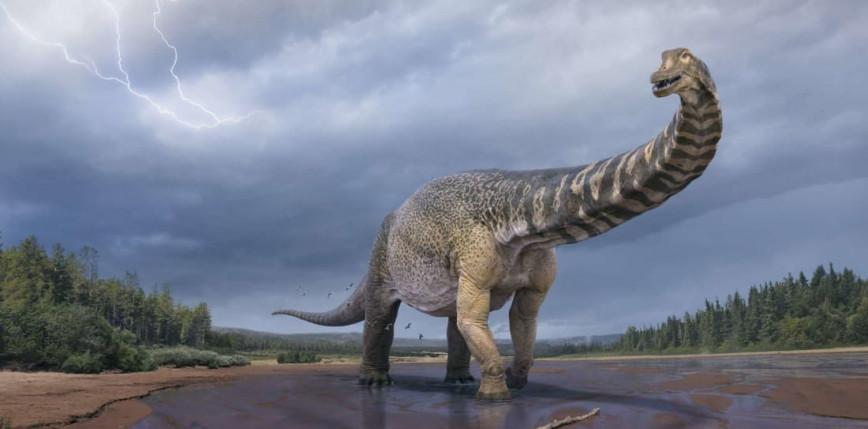 Nowy gigantyczny gatunek dinozaura odnaleziony w Australii