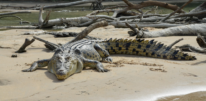 Indie: nastolatek został zjedzony przez krokodyla