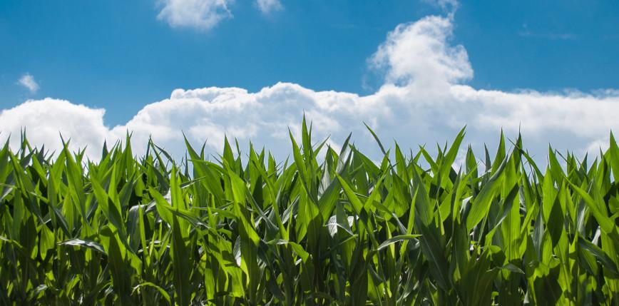 Wisconsin: w samochodzie na polu kukurydzy znaleziono 4 zastrzelone osoby