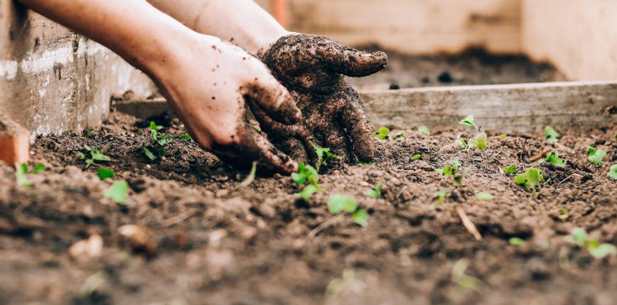 Korzyści zdrowotne wynikające z ogrodnictwa