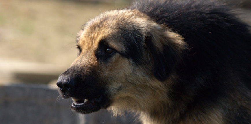 Australia: nie żyje kobieta zaatakowana przez 3 psy