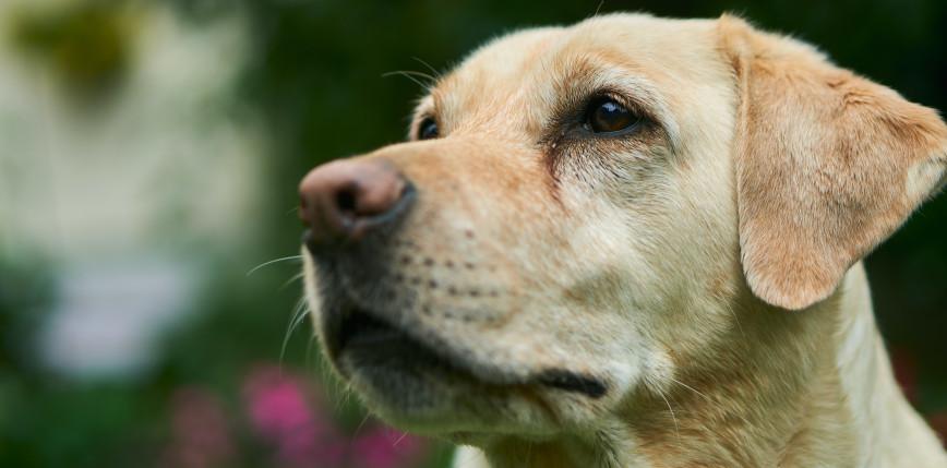 Zmiana przepisów: droższe mandaty za chodzenie z psem bez smyczy